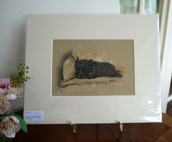 Little Black Cairn - Ca D2 - Lying on chair 1940's print by Lucy Dawson